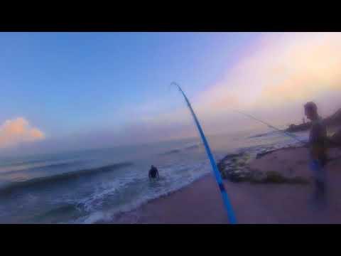 Fishing Jack Crevalle With Temple Fork Outfitters Surf Rod - Pesca De Jurel Con Cañas De Surf TFO