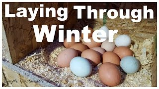 How to Encourage Your Chickens to Lay in The Winter