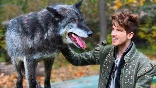 Filming With A Real Wolf! - Behind The Scenes Of Kingdom Music Video