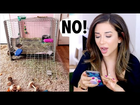 REACTING TO OUR SUBSCRIBERS RABBIT HABITATS! | PT. 2