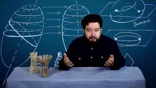 видео Архитектура - геометрия и искусство