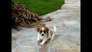 小犬の散歩 Puppy 犬 ペット pet 犬の散歩 可愛い 愛らしい 子犬 小さい...