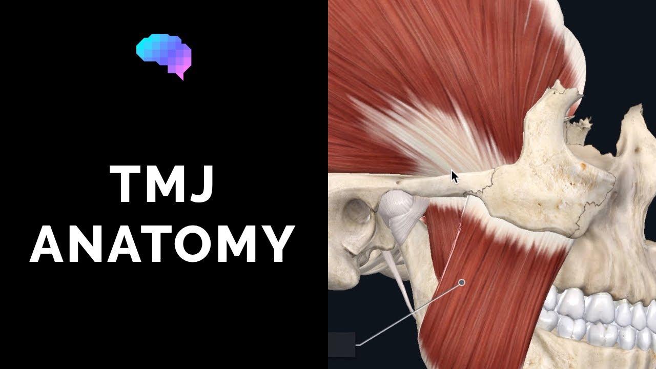 Temporomandibular Joint Tmj Anatomy 3d Anatomy Tutorial Youtube