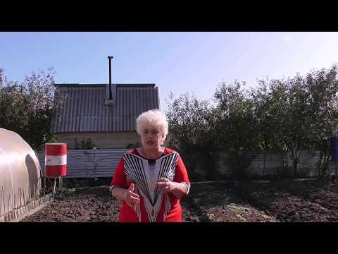Вопрос: Нужно ли добавлять в почву удобрение при посадке гиацинтов осенью?