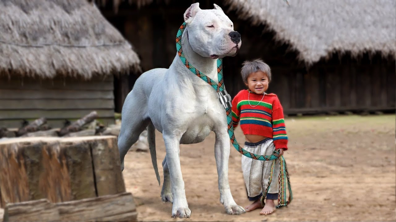 These Are 10 Best Dog Breeds for Kids - YouTube