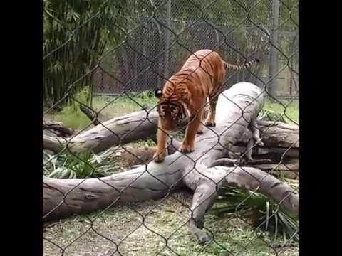 Jacksonville Fl Zoo