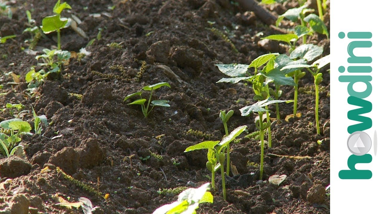 How to keep weeds out of your garden YouTube