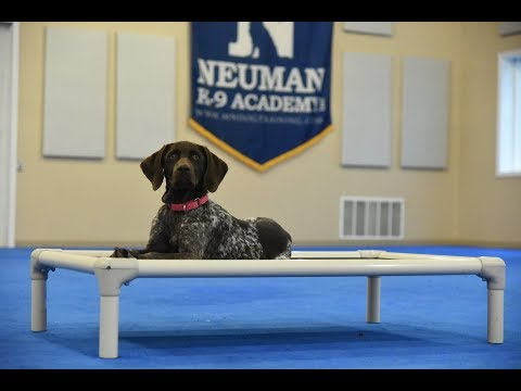 Kala (German Shorthair Pointer) Puppy Camp Dog Training Video Demonstration