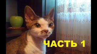 Кошки девон-рекс Особенности породы Часть 1