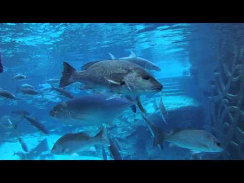 Atlantis Bahamas overview in 4 minutes