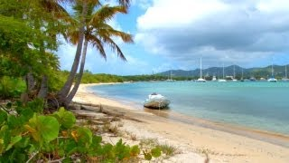 Backyard Scenes - Trellis Bay Part 3, Tortola, British Virgin Islands, Caribbean