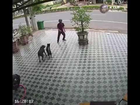 Hombre se defiende de perros usando movimientos de Karate Kid