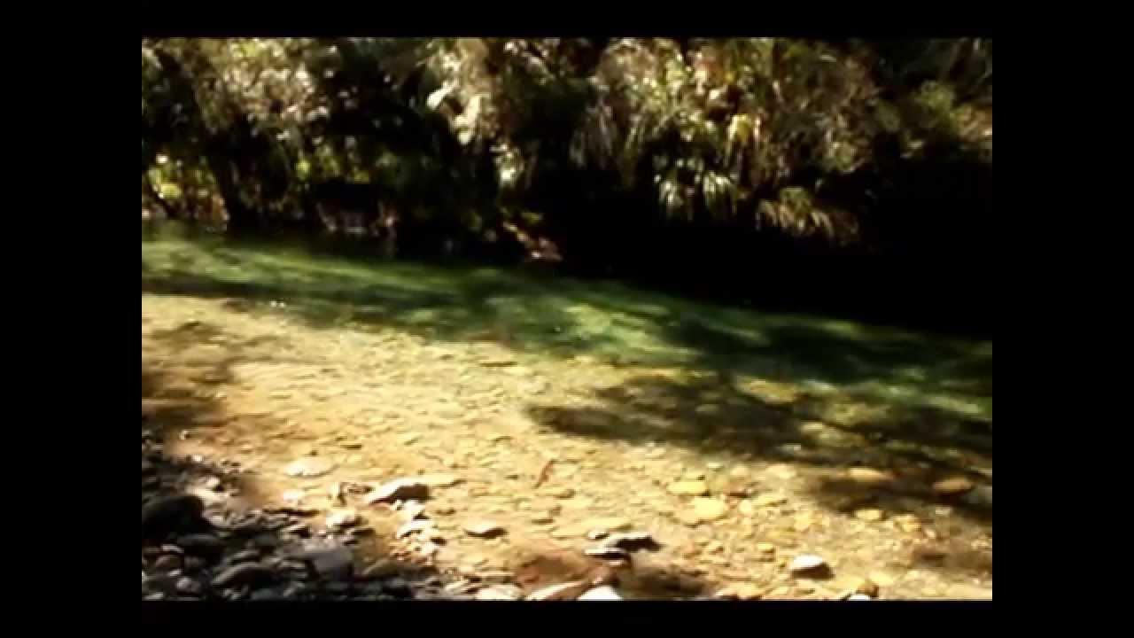 big fish stream