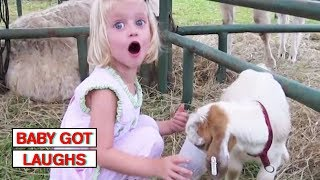 Babies and Zoo Animals   Try Not To Laugh Challenge