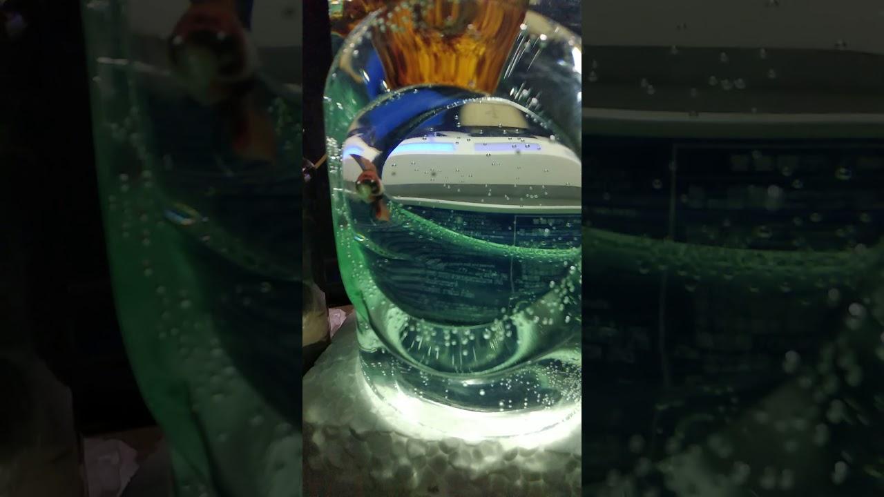Ikan Cupang galaxsy lion(muka mirip harimau) koi - YouTube