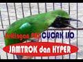 Setting Extrim Cucak Ijo Agar Jamtrok Dan Hyper  Mp3 - Mp4 Download