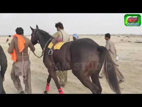 Horse race by Azhar Qaisrani
