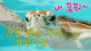 ☞【꿈보다해몽】장수의상징,거북이길몽입니다.심심풀이로봐주…
