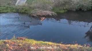 三鷹の話題 隠れパワースポット 早朝の三鷹市野川御塔坂橋界隈
