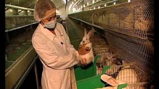 Так работают кролики