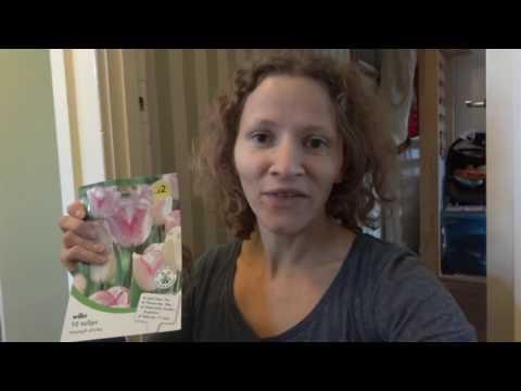Вопрос: Как вырастить тюльпаны в горшках?