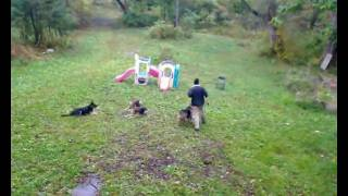Ny German Shepherd Obedience Dog Training In Hudson Valley - Platz Means Platz