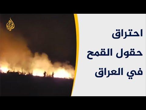 ????حقول القمح في العراق تحترق.. ما الأسباب؟  - نشر قبل 3 ساعة