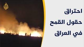 حقول القمح في العراق تحترق.. ما الأسباب؟
