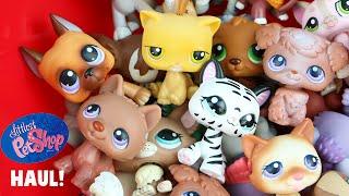LPS Littlest Pet Shop Toys Thrift Store HAUL! RARE Characters Great Dane
