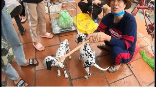 Phiên chợ chó mèo cảnh rẻ đẹp - Hỏi giá chó mèo mới nhất