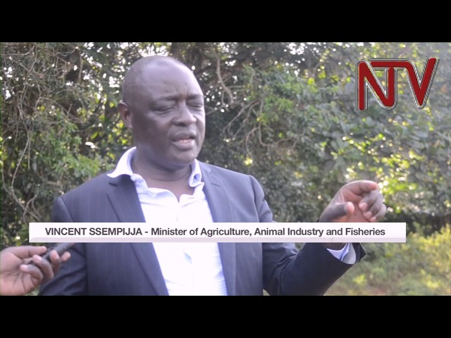 Government to replicate Kalangala project across the country