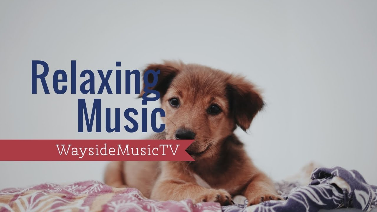 Relaxing Music. Cute dogs and puppies!