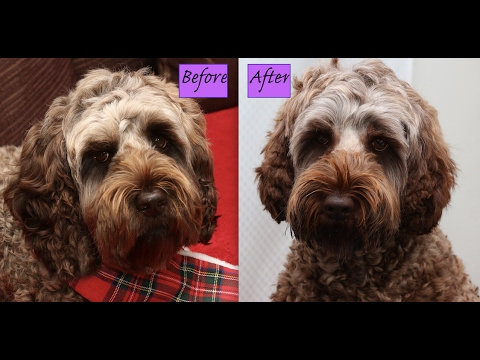 How to Cut amp Layer a Labradoodle Cockapoo Ears Demo