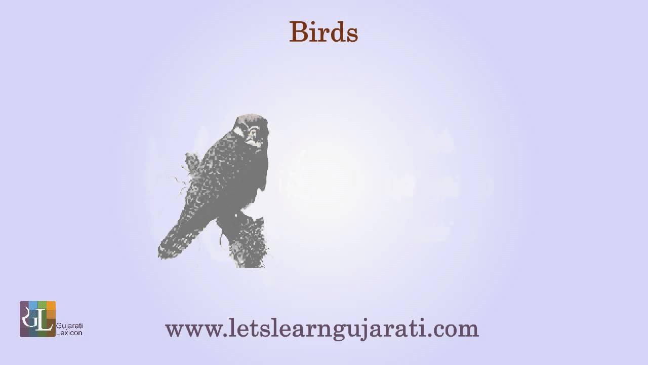birds in gujarati language Articles in local language (gujarati) joshi pn (2003)  grassland birds of  kachchh shrushti (2) 42-44  bird observation note on common crane  journal of.