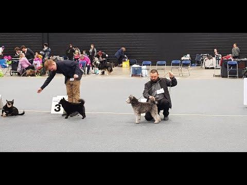 PUMI Life: Cheri' first Dog Show
