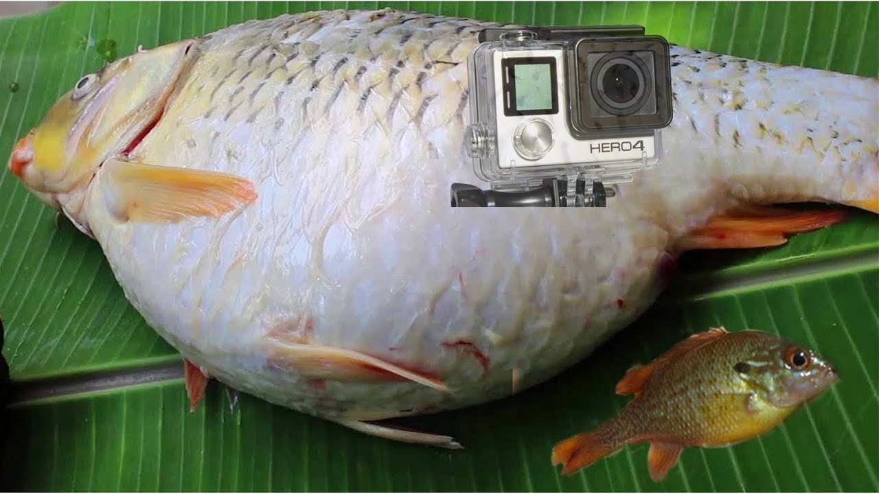 Gopro in bait trap 1 gopro fishing how to make gopro for Bait fish trap