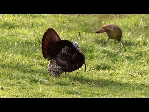 Arkansas Wildlife - S6.E2, Arkansas Turkey Hunting And Spring Fishing