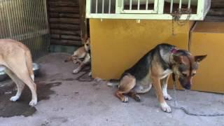 中谷さんちの猟犬日誌 猟犬を使った巻き狩りや単独猟 主に猪猟をやって...
