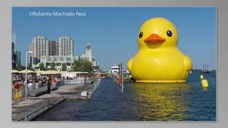 TORONTO,CANADA: Giant Rubber Duck in Harborfront SLIDESHOW
