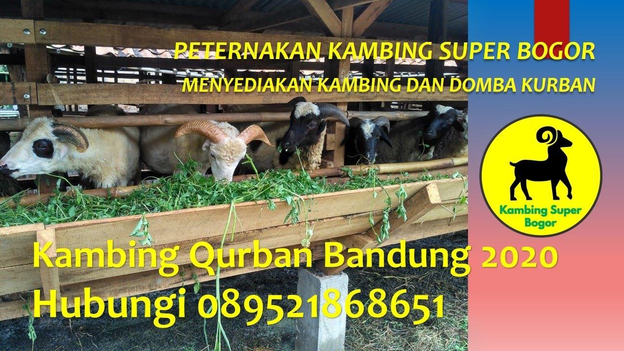 harga kambing aqiqah 2020 Bandung