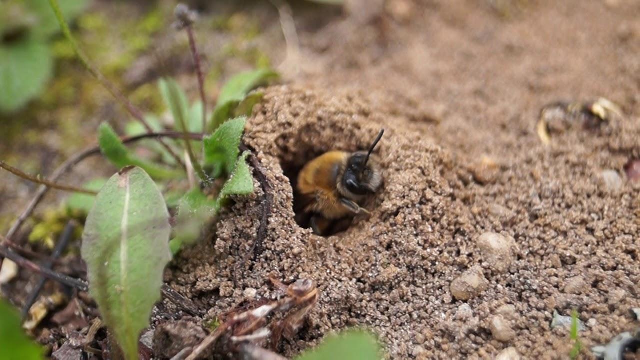 mezei méh a magas vérnyomás kezelésében új generációs magas vérnyomású gyógyszerek listája
