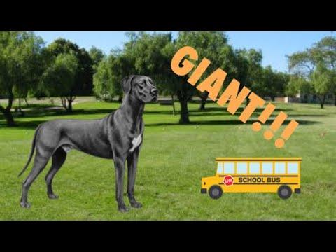 TOP TEN BIGGEST DOG BREEDS| TheAnimalGalaxy TAG