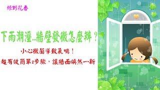 【綠野花香】下雨潮溼...牆壁發黴怎麼辦?小心黴菌導致氣喘!超有效簡單2步驟,讓牆面煥然一新!