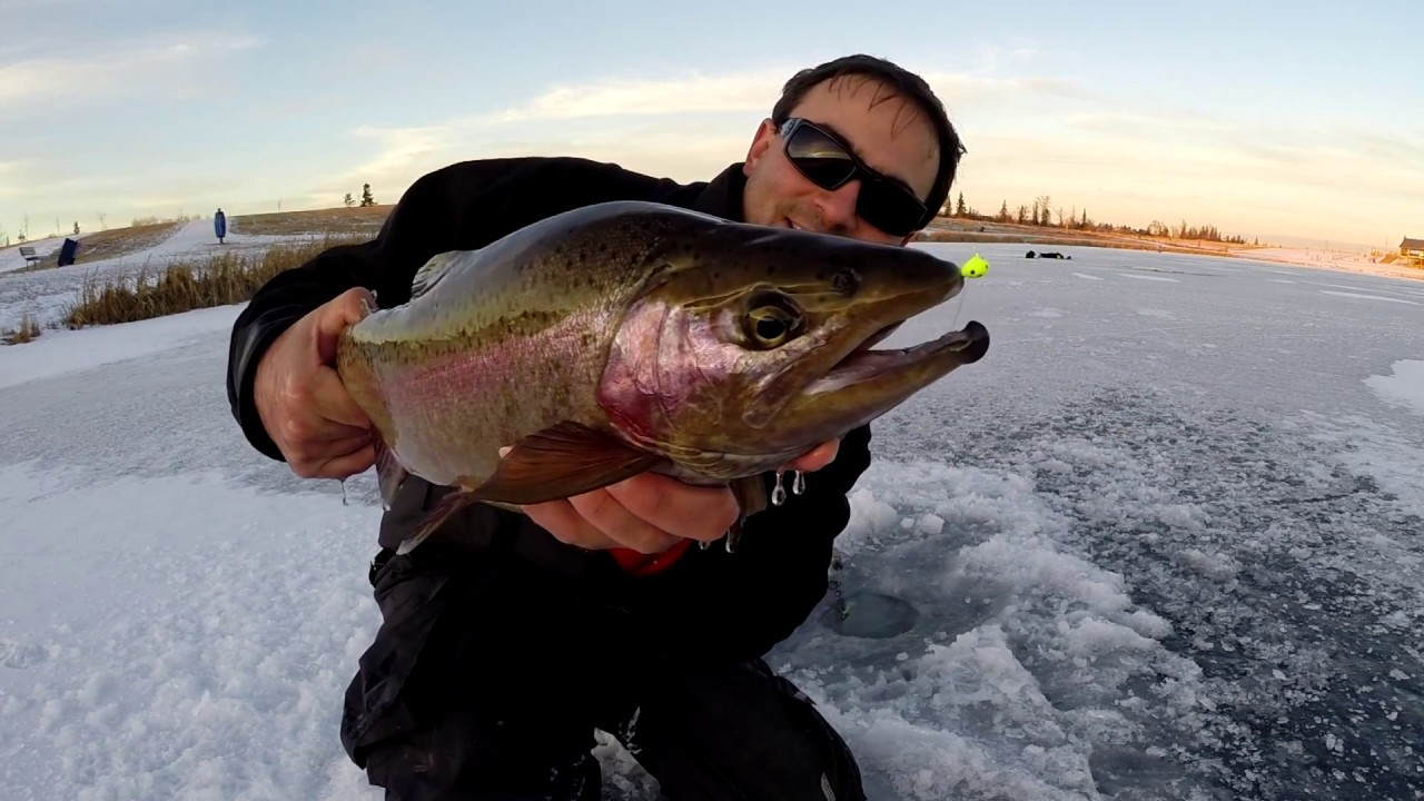 How to catch huge triploid trout ice fishing with a jaw for Jaw jacker ice fishing