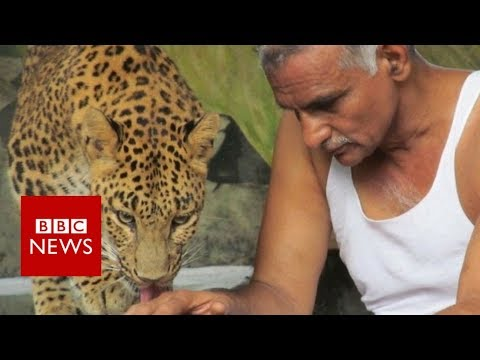 Indian man shares his house with leopards and bears - BBC News