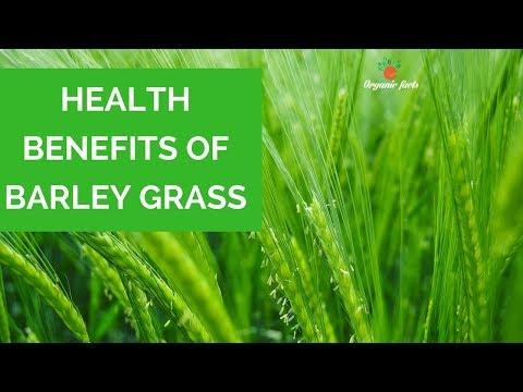 Top Health Benefits Of Barley Grass | Benefits Of Barley Grass