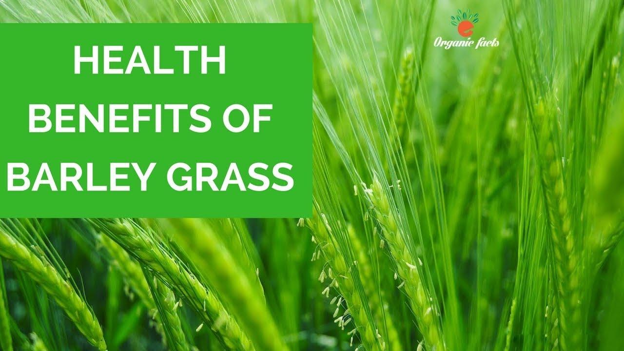 Top Health Benefits Of Barley Grass