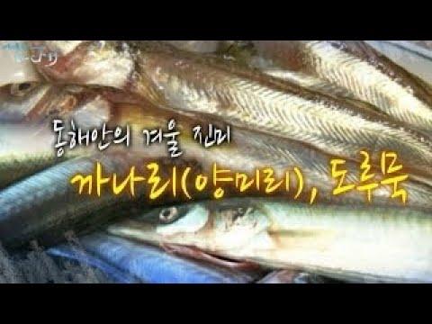 양미리(까나리) VS 도루묵 [어영차바다야]