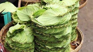 सिर्फ 1 दिन में खुनी बवासीर का रामबाण उपचार वो भी सबसे सस्ता - Piles Treatment  with Betel Leaf