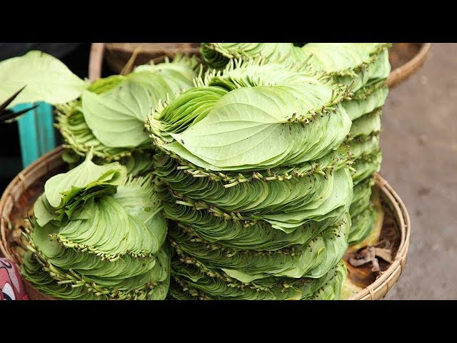 ????? 1 ??? ??? ???? ?????? ?? ?????? ????? ?? ?? ???? ????? - Piles Treatment  with Betel Leaf